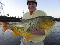 Monster Golden Dorado