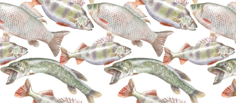Types of Fishes You can Find in Northern US & Canadian Waters
