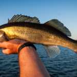 What To Know About Fishing Walleye With Planer Boards